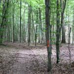 FelixLiebig Darmstadt Wald